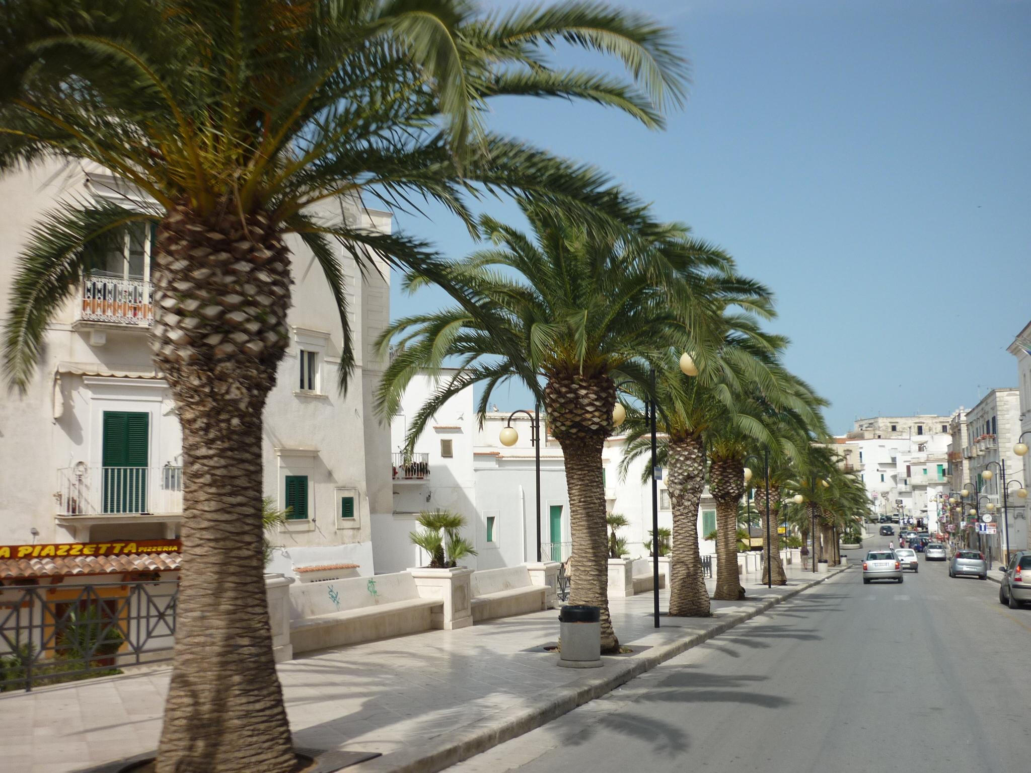 italiainpiega-pieghe meravigliose-itinerari-moto-sud-italia-gargano-vieste 3
