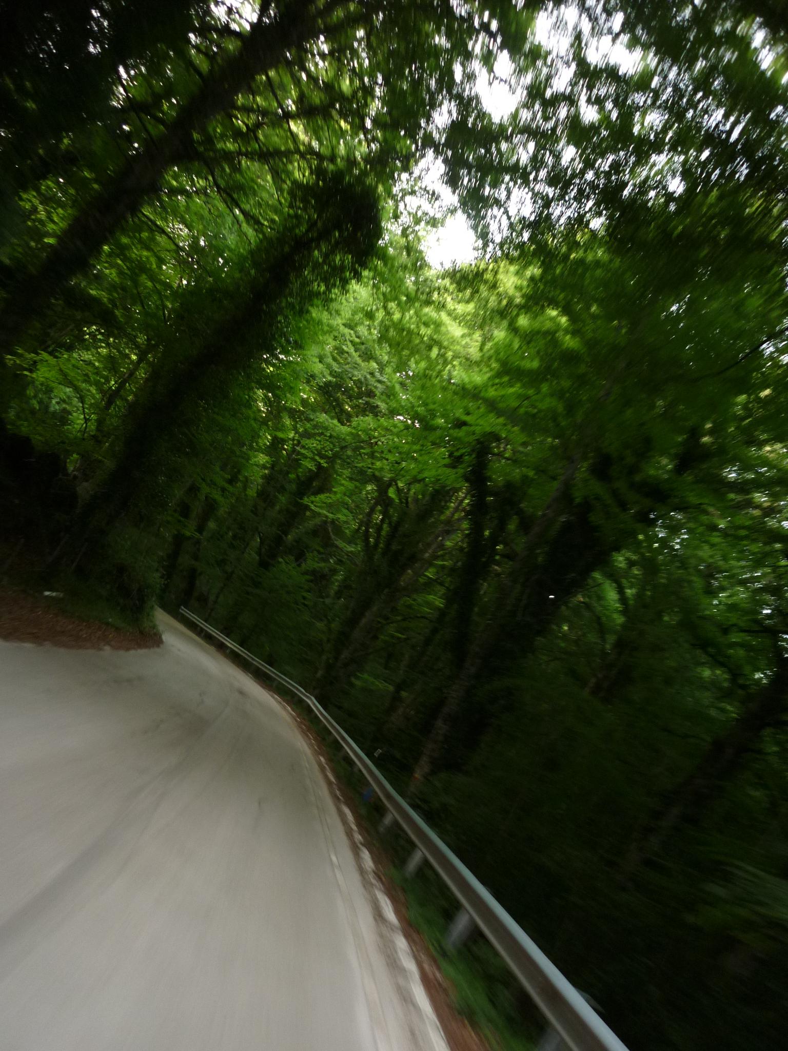 italiainpiega-pieghe meravigliose-itinerari-moto-sud-italia-gargano-foresta umbra 2